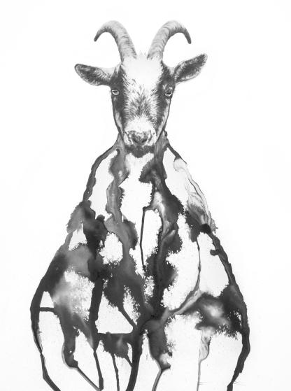 Goat by Annika Wessmark