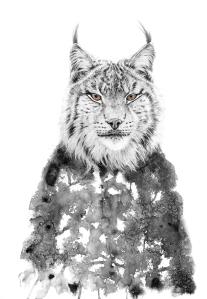 Lo Lynx